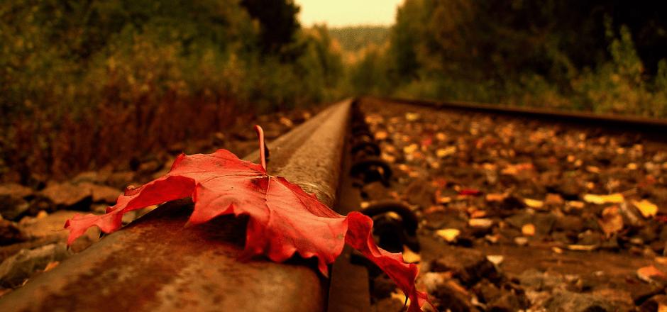 Rüzgar ve Yaprağın Kısa Hikayesi