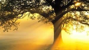 Tuğşah Bilge – Dert Ağacı.